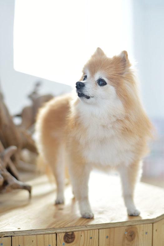 宝塚市 ペットフォト 犬