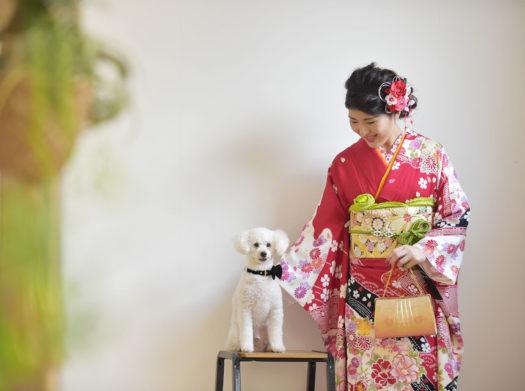 宝塚 成人式 前撮り 犬 トイプードル