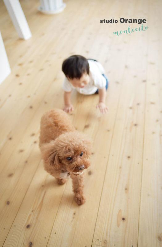 宝塚市 犬と撮れる