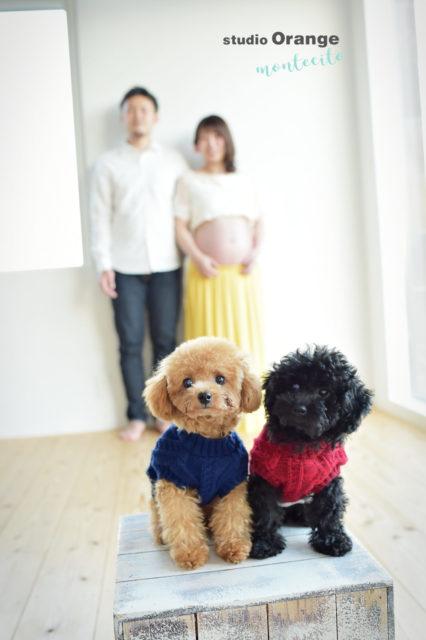 神戸市 マタニティフォト 犬と撮れる写真