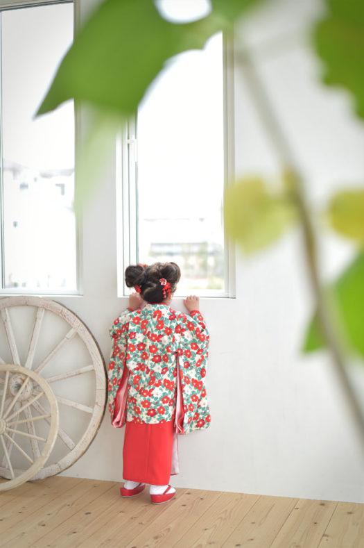 宝塚市 七五三 3歳女の子 椿の着物