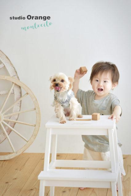 宝塚 1歳 バースデーフォト 犬 ペット