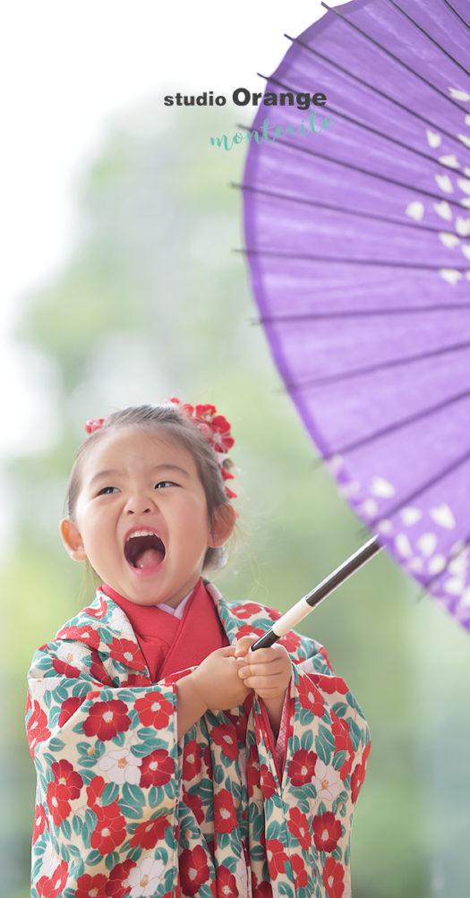 伊丹市 七五三 2歳 女の子 椿柄の着物