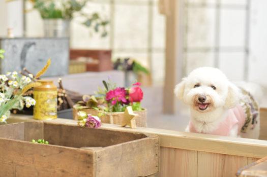 高槻市 ペットフォト 犬と撮れる