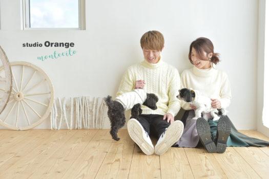 宝塚市 トイプードル チワマル 犬と撮れる家族写真