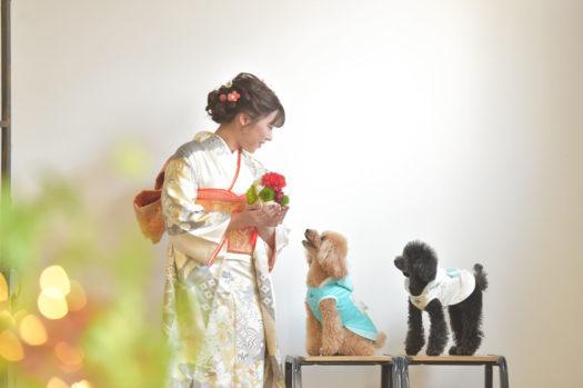 宝塚市 成人式 犬といっしょ トイプードル