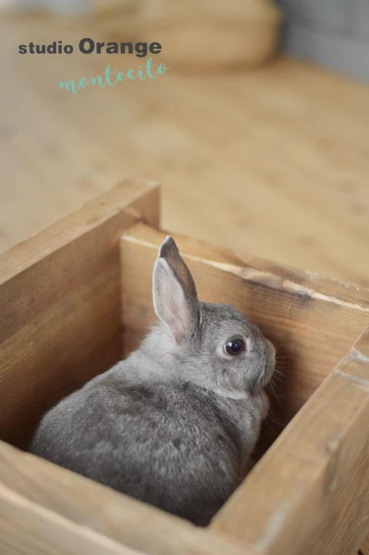 丹羽市 ウサギ ペットフォト 写真館