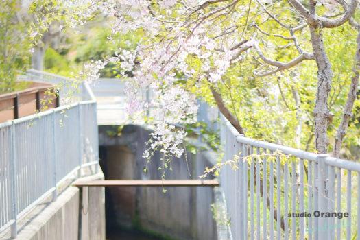 換気 桜 宝塚市