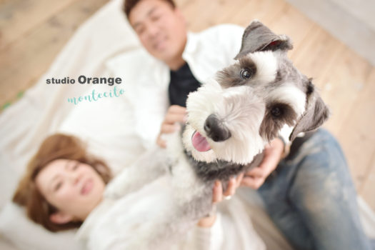 ペットフォト ミニチュアシュナウザー 犬 犬写真 写真館 スタジオオレンジモンテシート