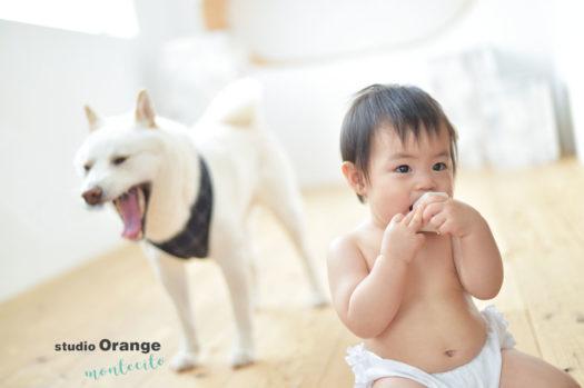 宝塚市お誕生日犬