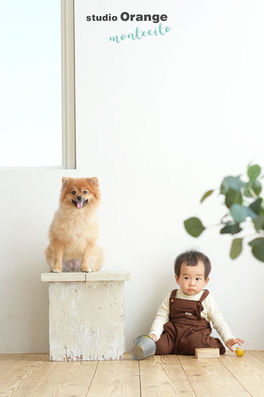 尼崎市 1歳バースデーフォト ポメラニアンと一緒