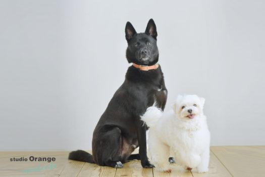 宝塚市 ペット 犬