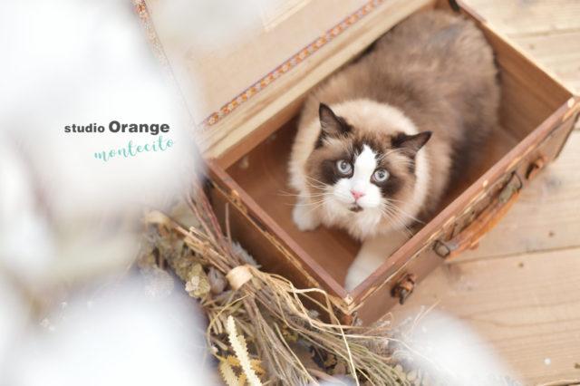 宝塚市 写真館 スタジオオレンジモンテシート 猫 ペットフォト