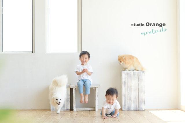 宝塚市 写真館 スタジオオレンジモンテシート 犬 バースデーフォト