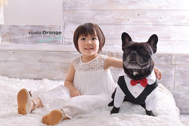 宝塚市 七五三 写真館 フォトスタジオ 豊中市 ペット 犬 ブルドッグ