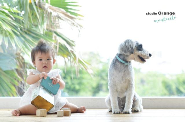 ペット 犬 赤ちゃん ミニチュアシュナウザー